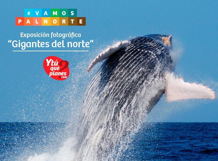 Miniferia Promperu con Exhibición fotográfica de ballenas - Plaza Norte