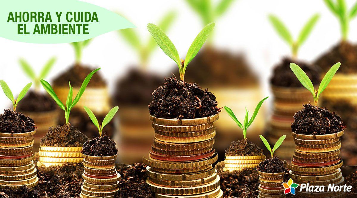 ¿Cómo ahorrar dinero y cuidar el medio ambiente? - Plaza Norte